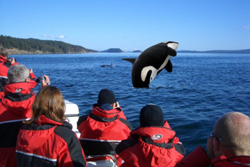 Victoria Whale Packages