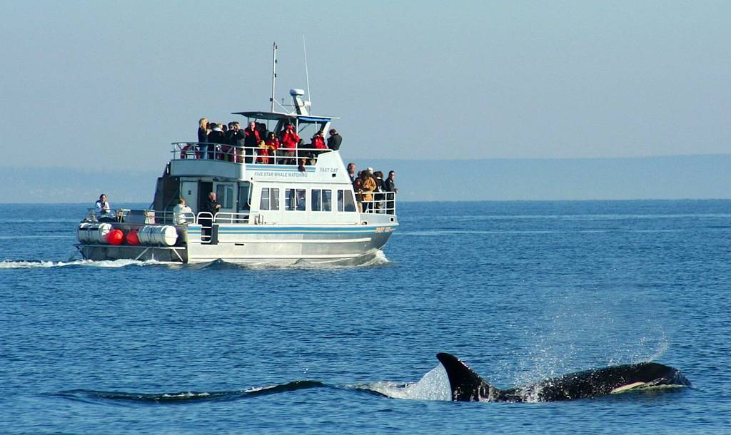 Photo Courtesy of 5* Whale Watching